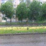Штормовое предупреждение! В Ростовской области ожидаются сильные осадки и шквалистый ветер