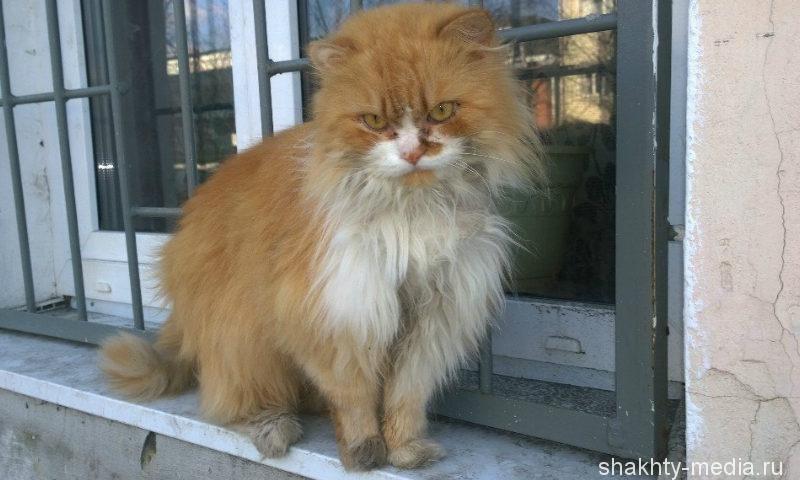 В Шахтах выявлено бешенство у домашней кошки