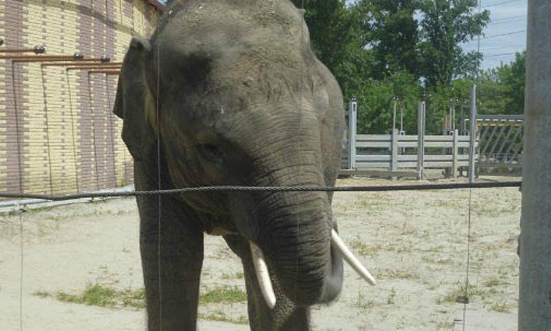 В Ростовском зоопарке появился новорожденный слоненок
