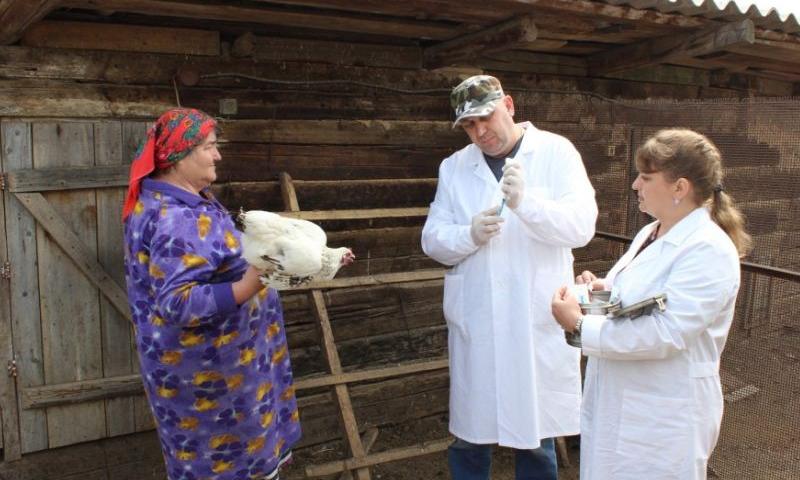 В феврале на Дону стартует плановая вакцинация кур, гусей и уток против гриппа