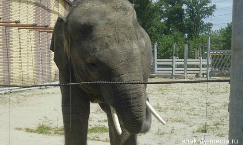 Слониха, родившаяся в Ростовском в зоопарке в январе, обрела имя