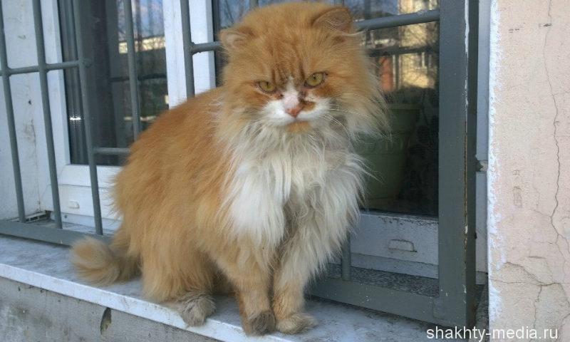 В Азове бешеный кот покусал десятилетнюю девочку