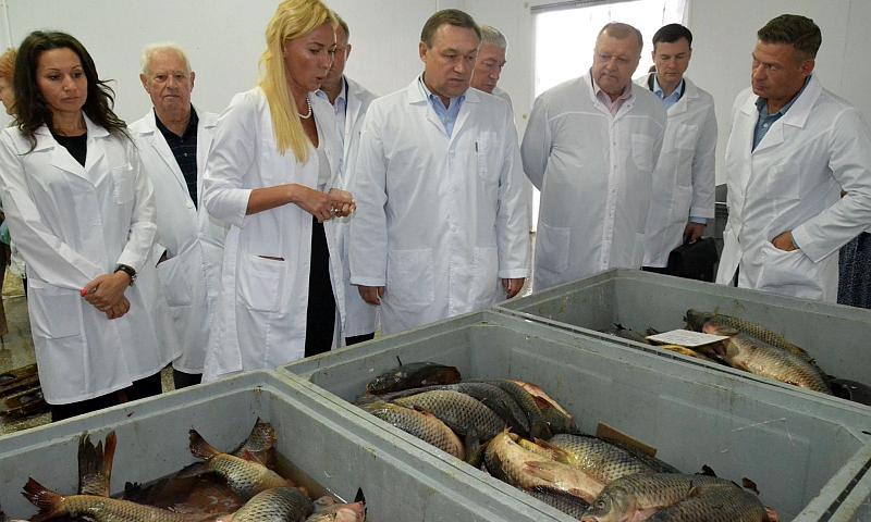 В Ростовской области планируют увеличить производство рыбы в полтора раза