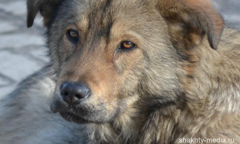 В Ростовской области взбесившийся волк напал на пасечника