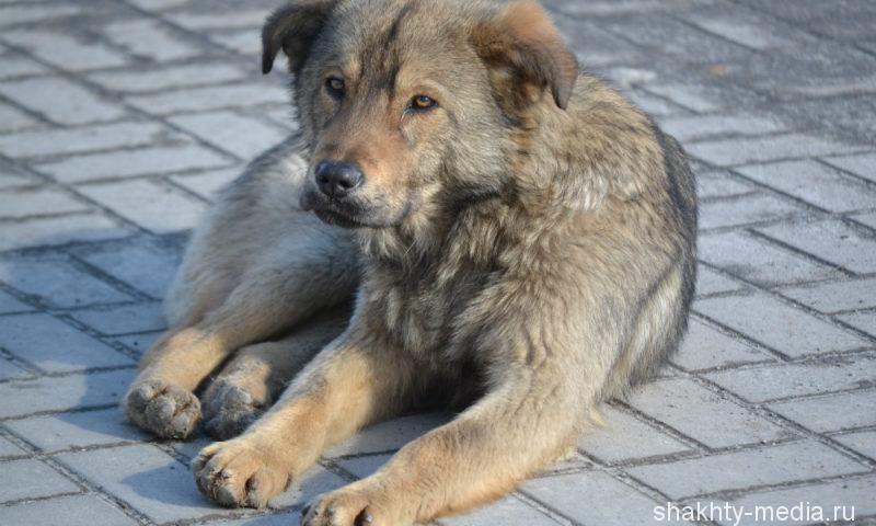 В городе Шахты принимаются заявки на отлов безнадзорных животных