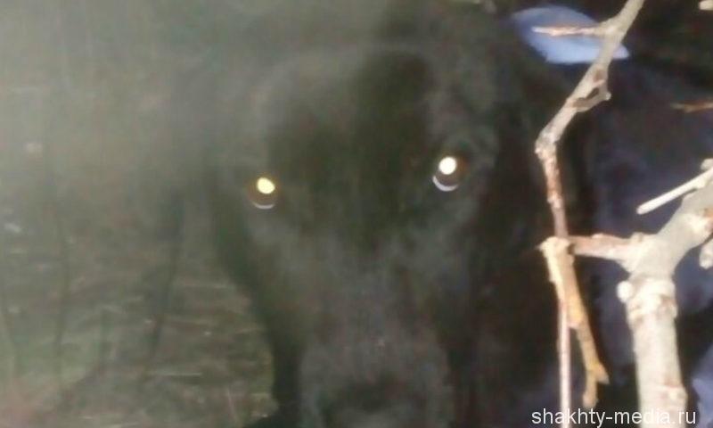 В Шахтах пса привязали за ногу к дереву и оставили его умирать