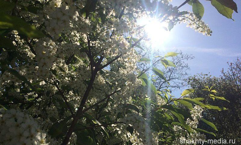 Тепло до 29 градусов и безоблачное небо принесет новая неделя в Шахтах