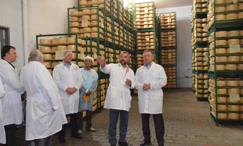 Семикаракорский сыродельный завод увеличил объемы производства