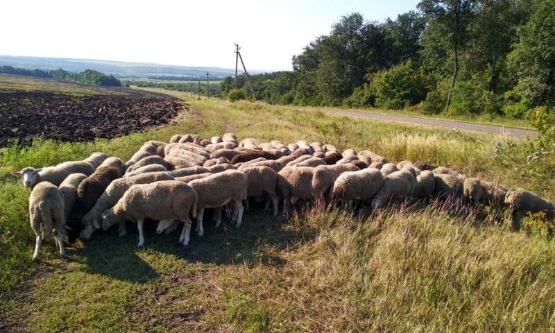 В Ростовской области задержаны контрабандисты с живым товаром