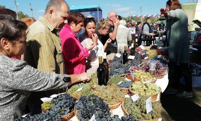 На этнографическом фестивале «Донская лоза» побывало более 25 тысяч человек