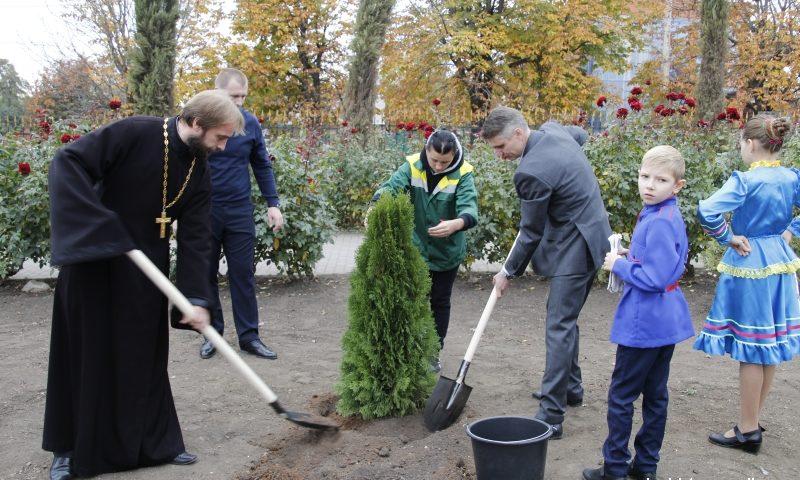 В городе Шахты высажено более 1000 деревьев