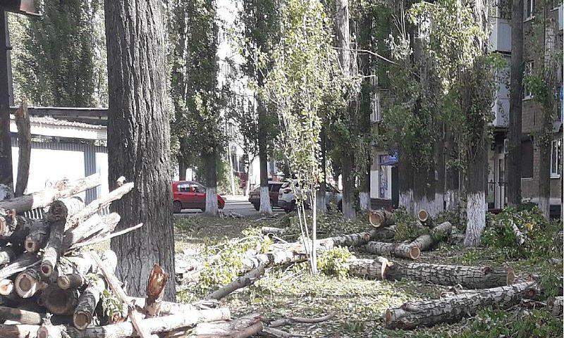 В Шахтах проводится опиловка аварийных деревьев