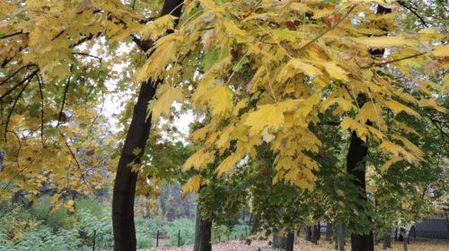 Последнее воскресенье октября порадует шахтинцев потеплением