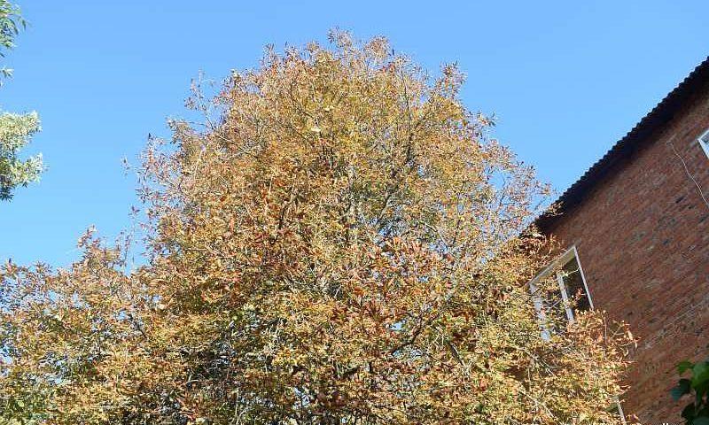 В Шахтах сегодня солнечно, но порывы ветра будут приносить  холод