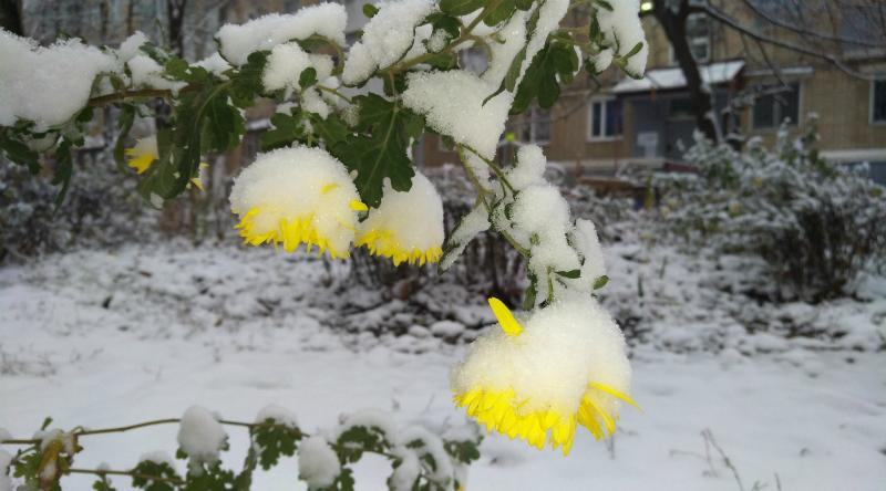 На Шахты надвигается дождь, переходящий в мокрый снег