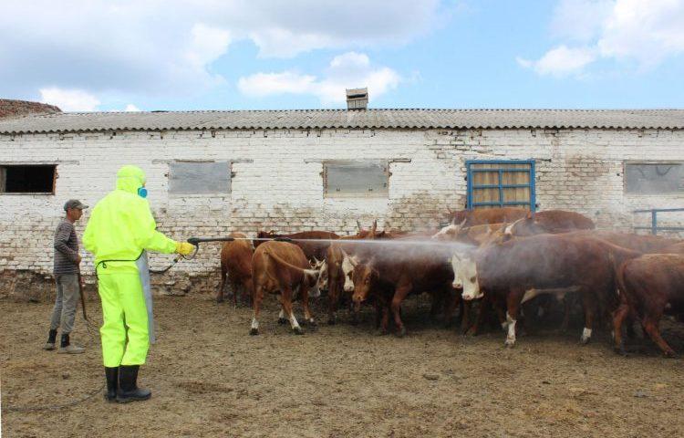 На Дону ветеринарные врачи провели более одного миллиона противоклещевых обработок скота