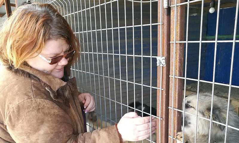 3000 спасенных животных центр «Святобор» пристроил в добрые руки