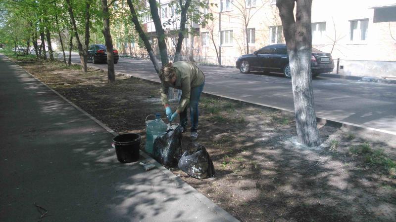 На центральных улицах г.Шахты побелили деревья