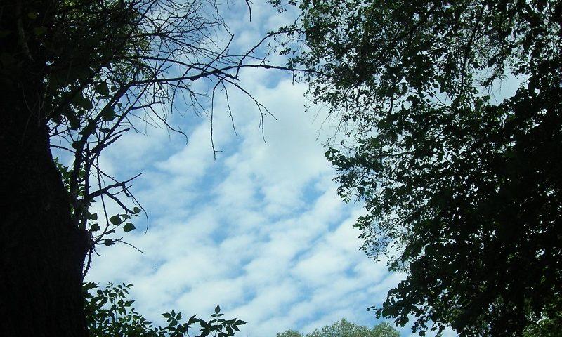 В Шахтах ожидается жаркая погода, возможен дождь
