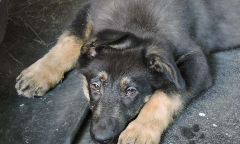 С 1 января 2020 года вступит в силу закон «Об ответственном обращении с животными»