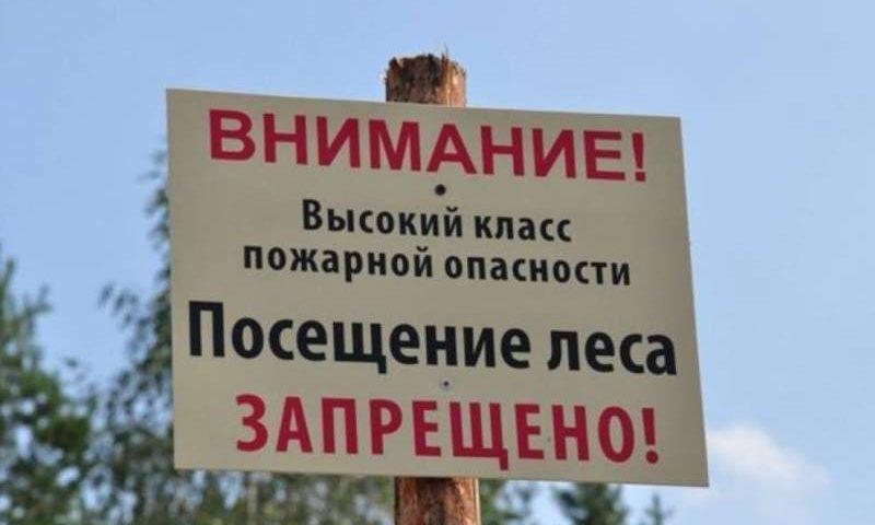 На Дону продлен режим ограничения пребывания в лесах