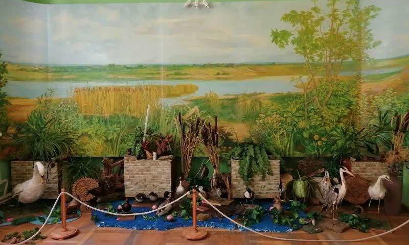 В Шахтинском краеведческом музее начал работу обновленный зал донской природы