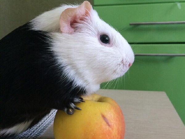 Подружки-свинки всегда мирятся
