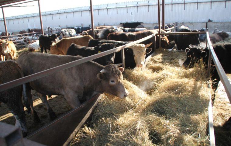 В Ростовской области прошел «День сельскохозяйственного кооператива»