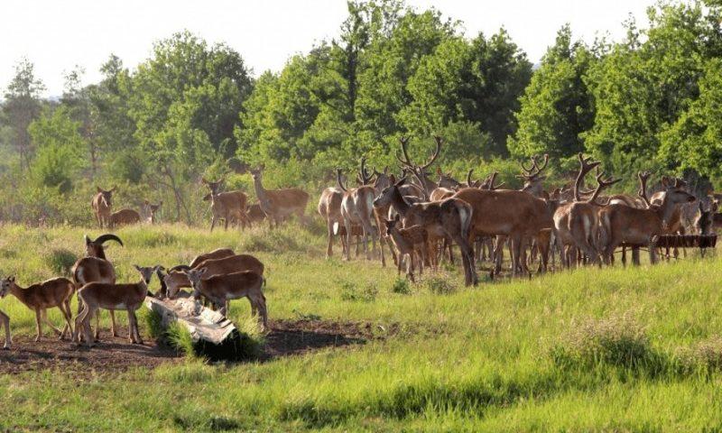 Природоохранной прокуратурой проведены проверки  исполнения законов в сфере охоты и сохранения охотничьих ресурсов