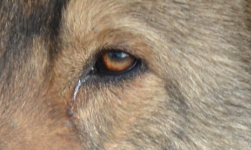 На Дону в новогодние праздники бешеная куница напала на семилетнего ребенка