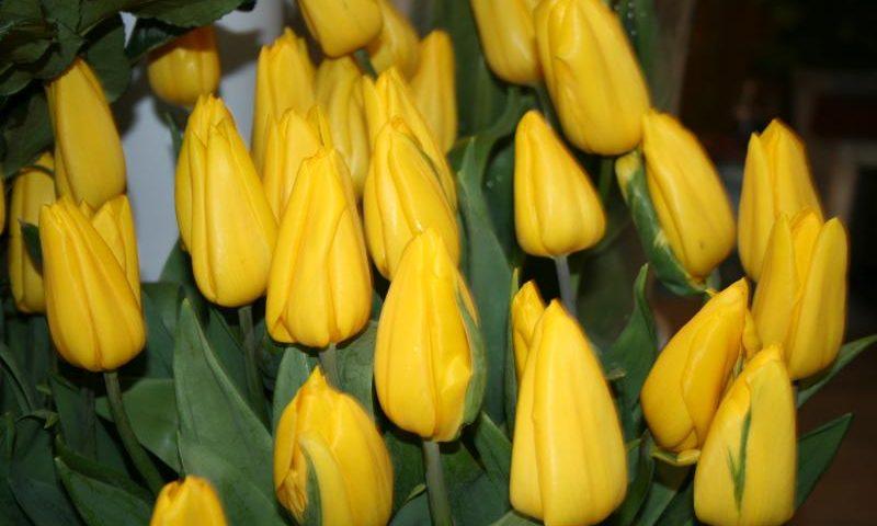 С 1 по 10 марта в Шахтах проходит цветочная ярмарка