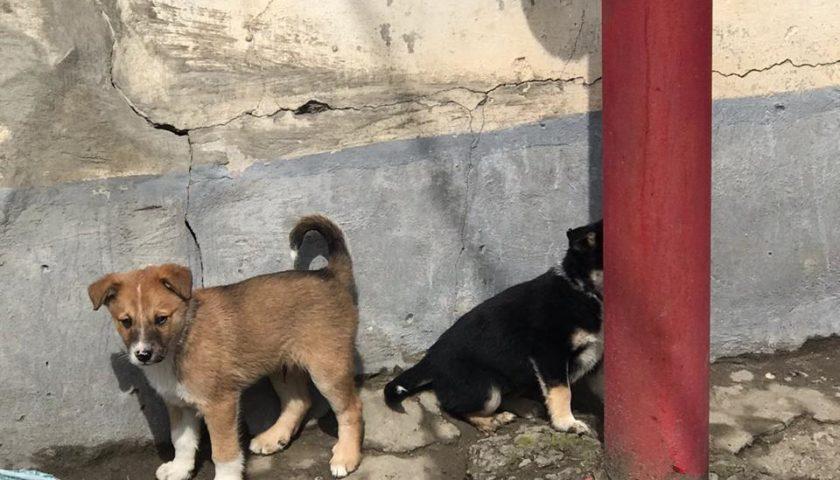 Полиция проводит проверку по факту расстрела щенков в центре города Шахты