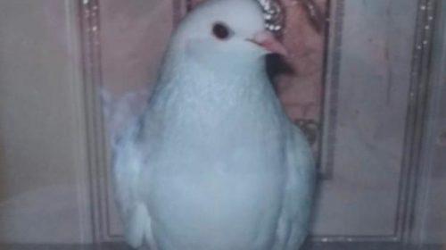 Удивительную историю спасения голубя рассказал юнкор «Шахтинских известий»