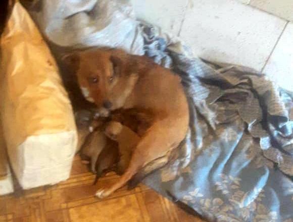 В г.Шахты собаку, которую живодер ударил электрошокером, и ее новорожденных щенят, удалось спасти