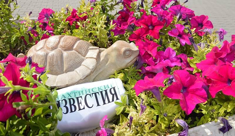 Победитель конкурса «Раз ромашка, два петуния» в качестве приза получит садовую скульптуру черепахи