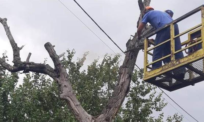 В Шахтах продолжаются работы по опиловке аварийных деревьев