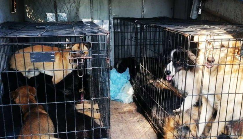 Осуществляется прием заявок на отлов безнадзорных животных в г.Шахты