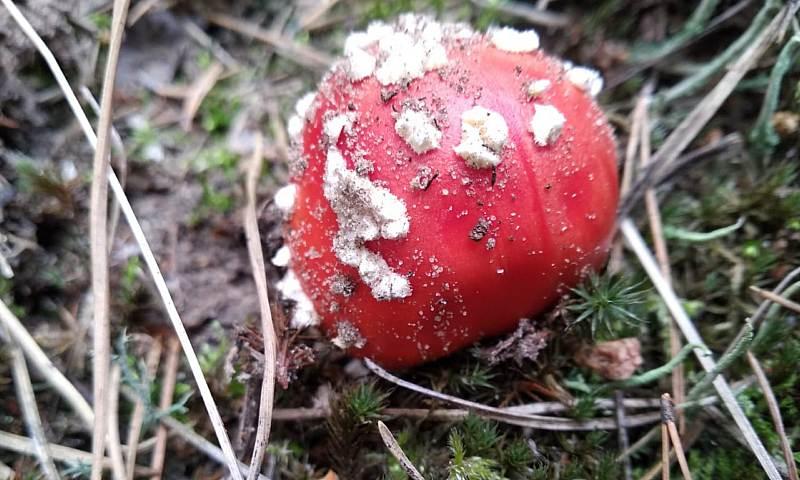 Отравление грибами: первые симптомы и помощь