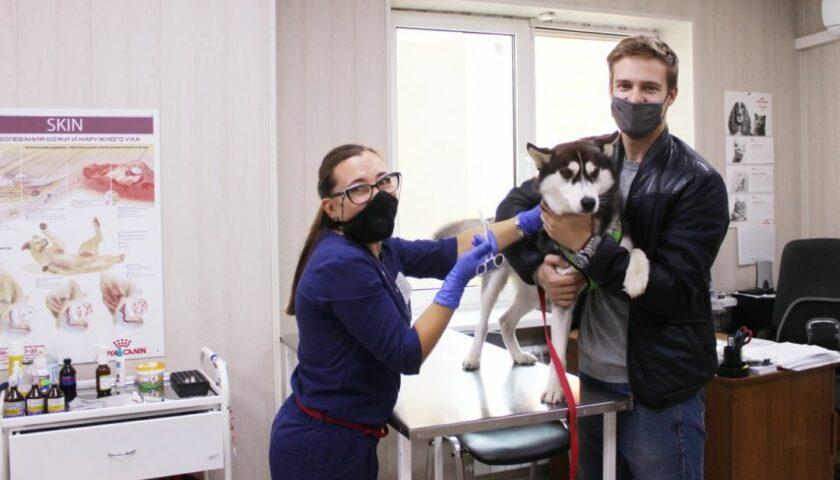 В Шахтах пройдёт день льготной стерилизации животных