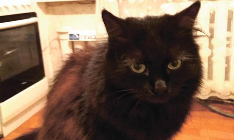 История спасения кошки Маркизы