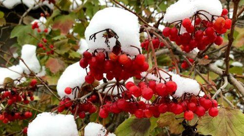 В Шахтах ожидаются пасмурная погода и осадки